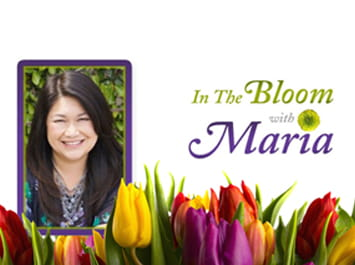 In the Bloom with Maria